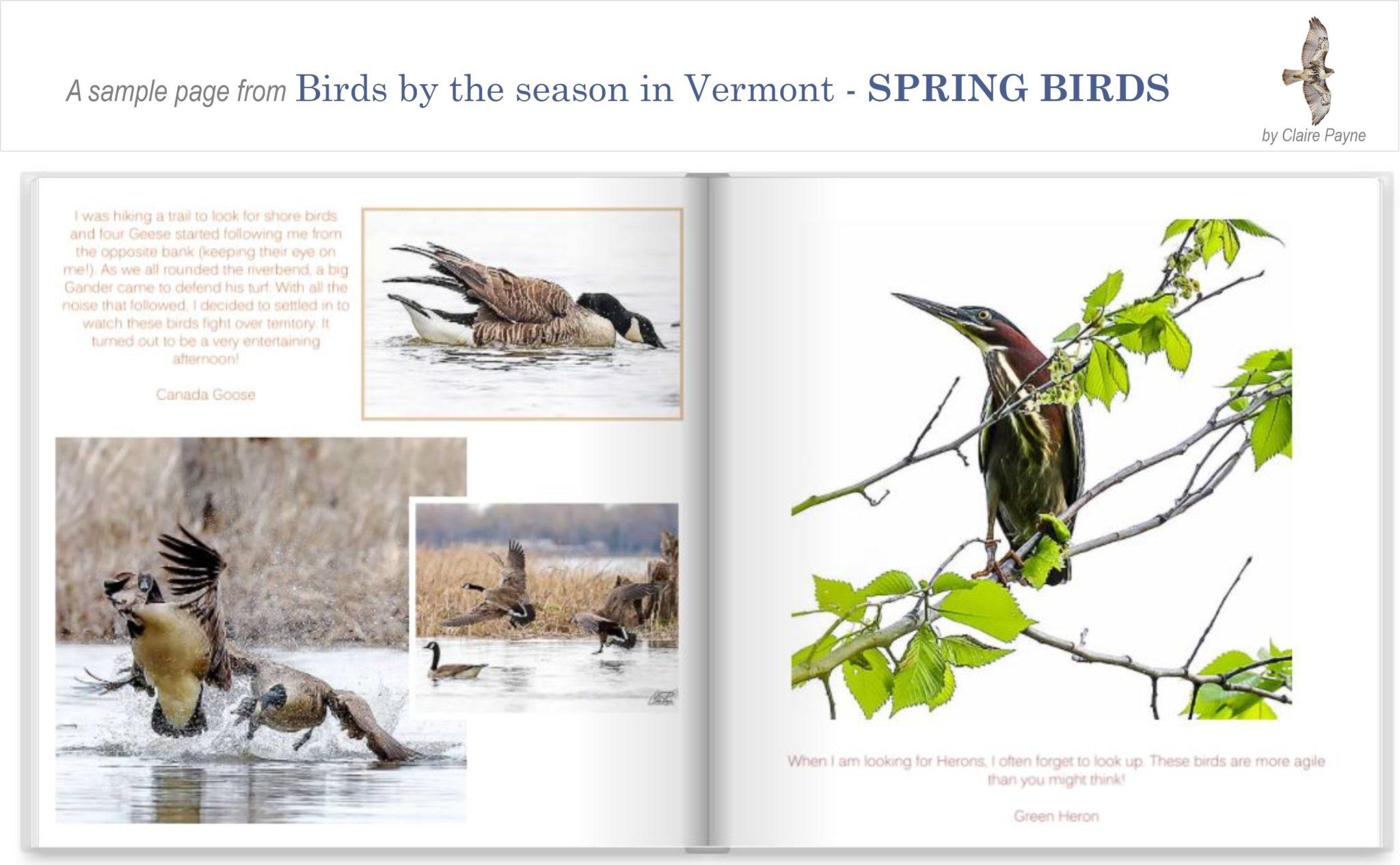 Book - Spring Birds
