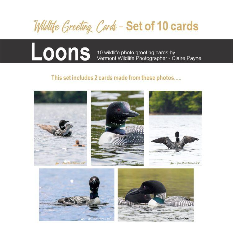 Set of 10 Wildlife photography cards